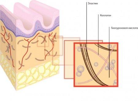 Схема строения кожи: гиалуроновая кислота, эластин и коллаген
