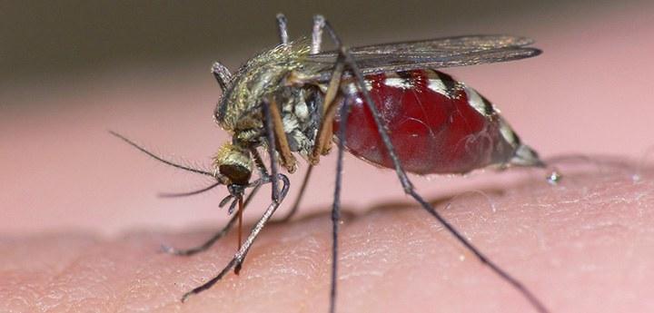 Крем от укусов комаров и насекомых